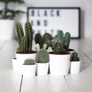holborn - décoration d'intérieur - design d'espace - Tendance déco Cactus