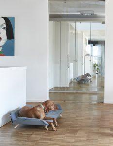 holborn - décoration d'intérieur - design d'espace - Accessoires design pour chiens et chats
